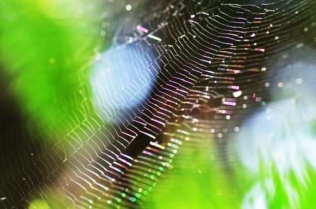 夢 蜘蛛 の 蜘蛛の夢で宝くじが当たる?蜘蛛が体につく夢の意味等21選